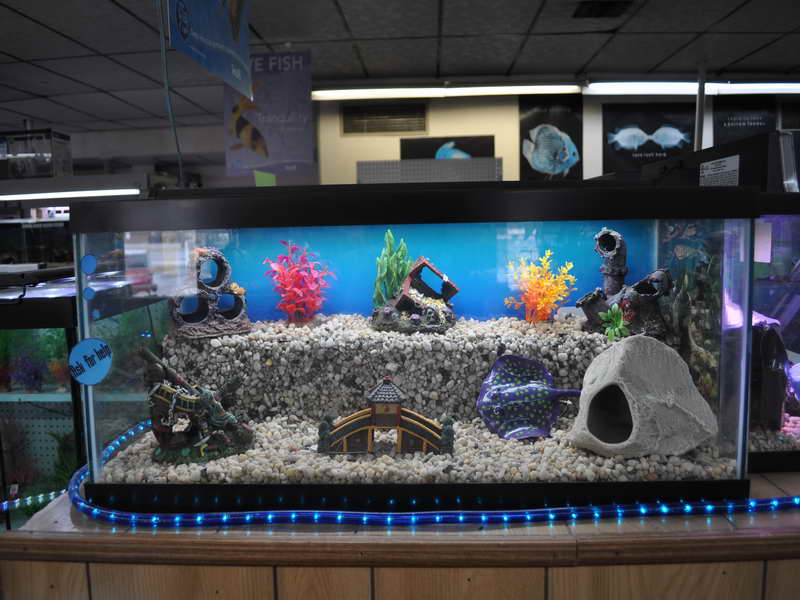 Aquarium decorations decoration designs guide for Tall fish tank decorations